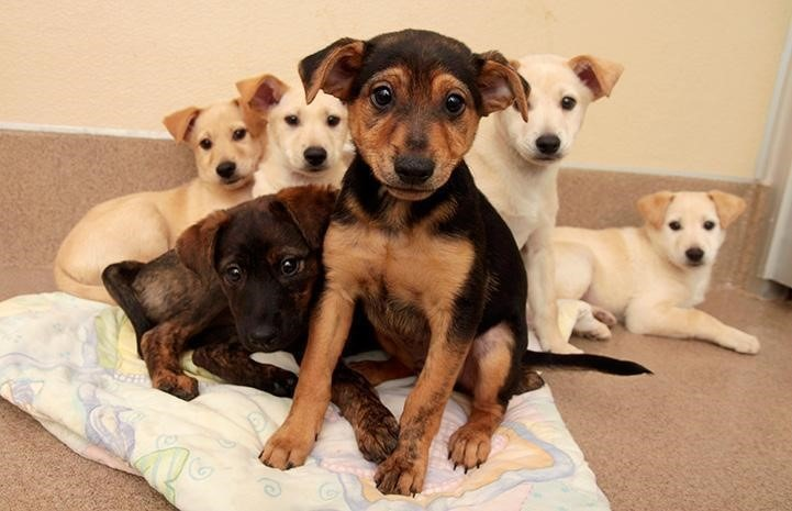 Cute Puppies group picture