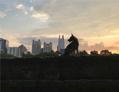 German Shepherd Dog with Atlanta Skyline sunset