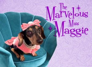 The Lucky Dog Maggie the black and tan wheelie dachshund