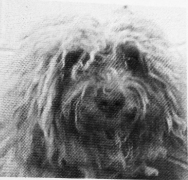Rescued Dog with overgrown, matted hair