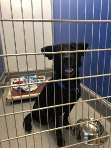 smiling black rescue dog waiting to be adopted