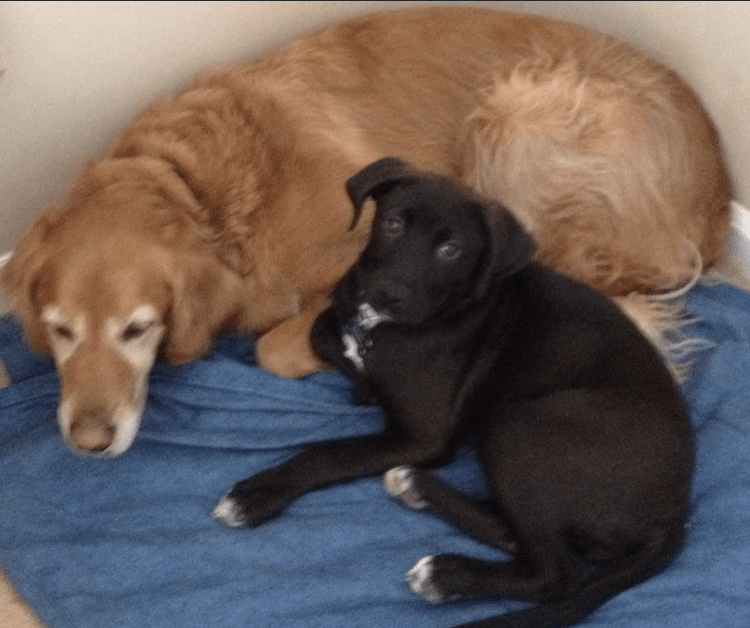 Brody (right) cuddled next to another of Ellen's dogs, Marley (left)