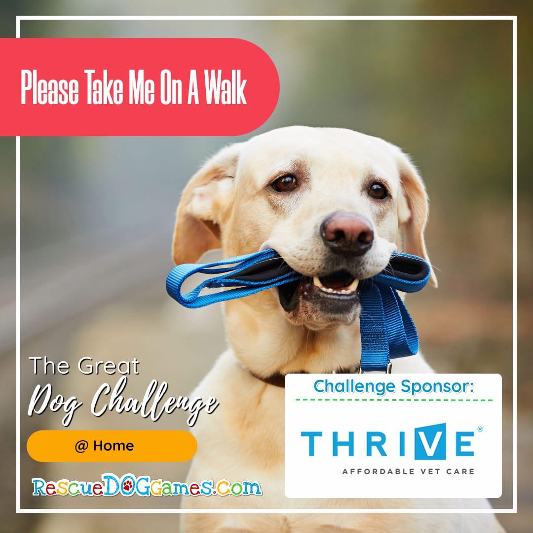 adorable dog bringing own leash Great Dog Challenge Atlanta