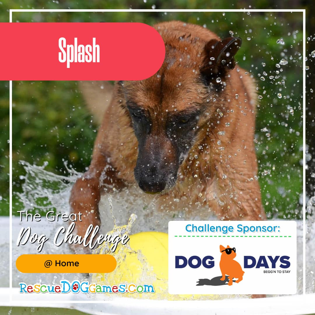 german shepherd spashing water Great Dog Challenge Atlanta