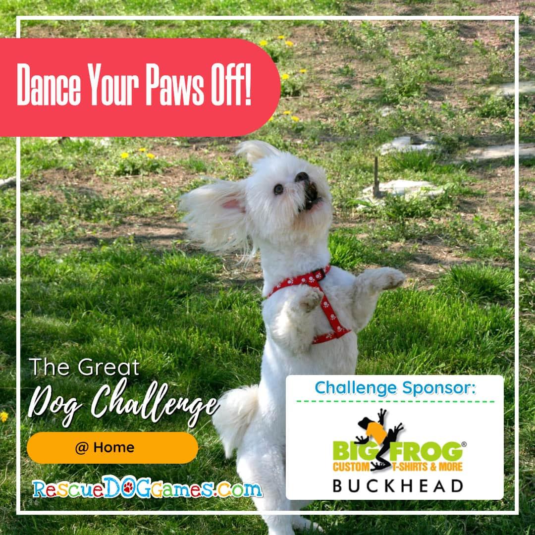 playful dog standing up Great Dog Challenge Atlanta