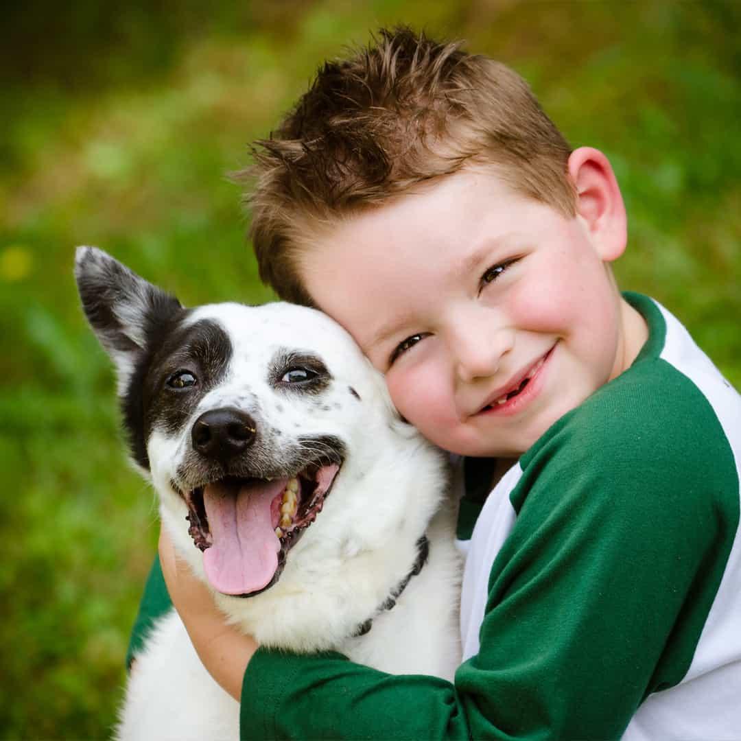 Cuddliest Challenge Jack Russell Terrier hugged by a kid