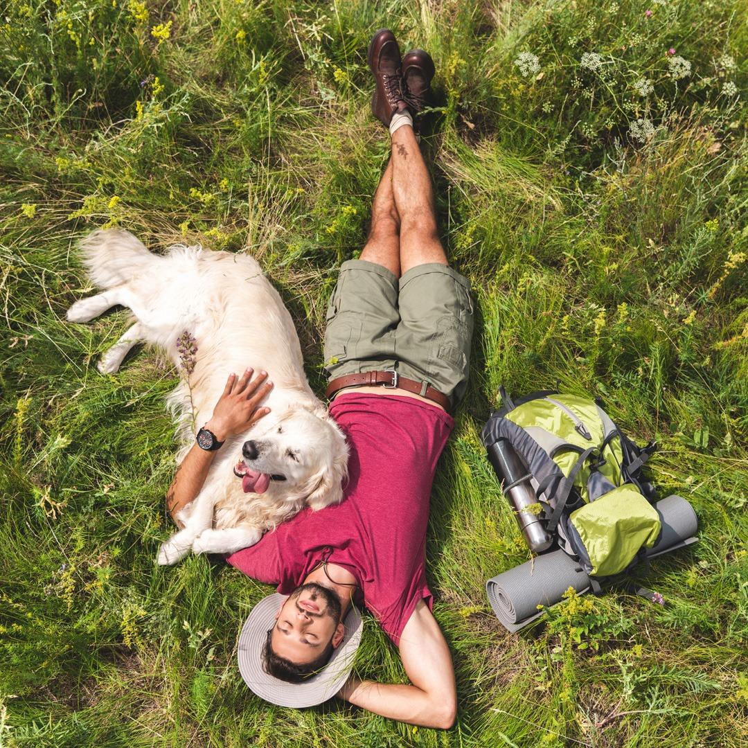 Dog Venture Challenge golden retriever laying on grass