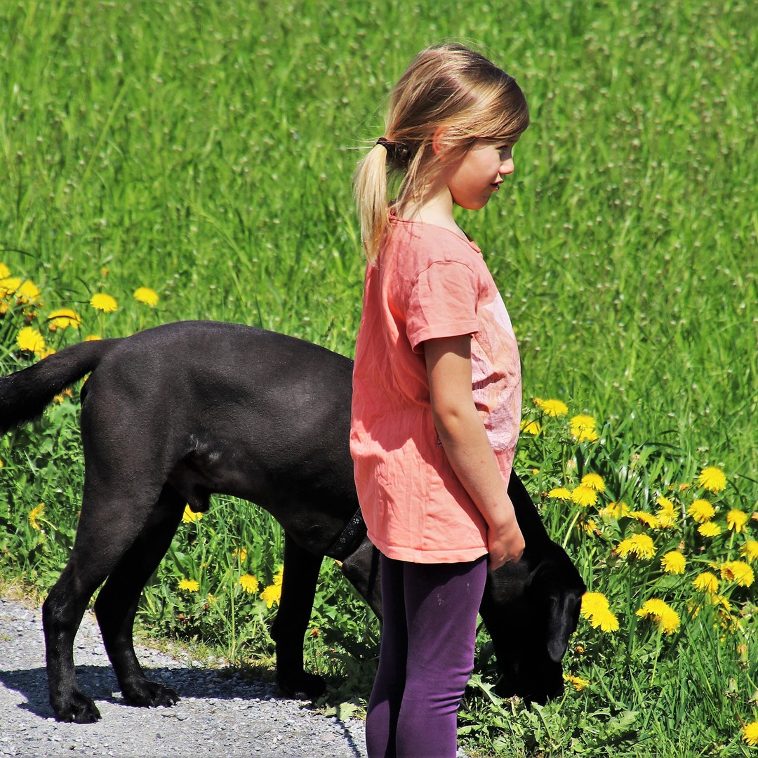 Enjoy The Moment challenge labrador retriever checking flowers with kid