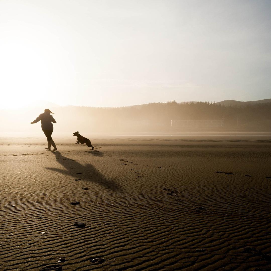Let s Go Challenge pug running on beach