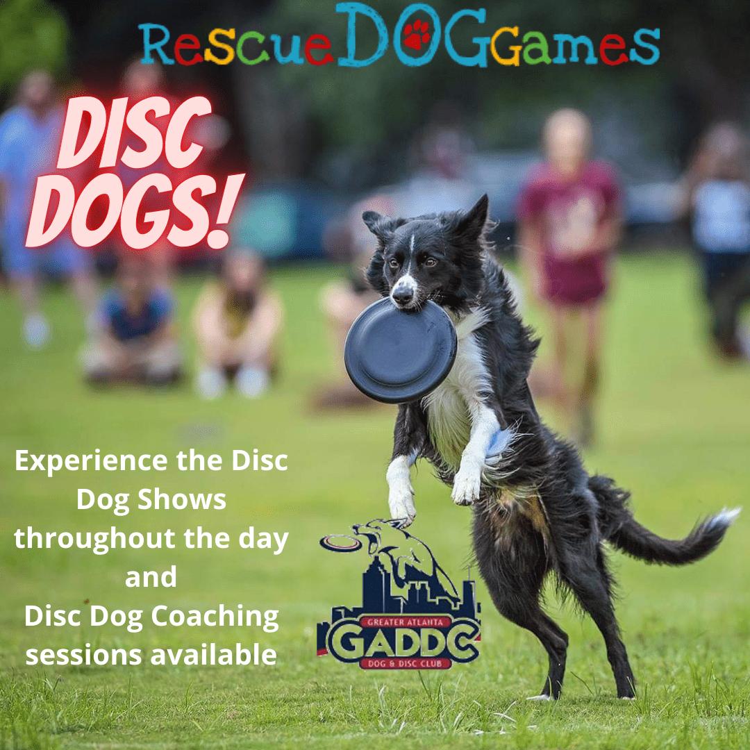 disc dog post
