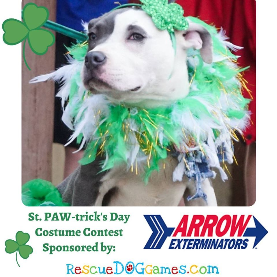 Arrow St. PAW-trick's Costume Contest