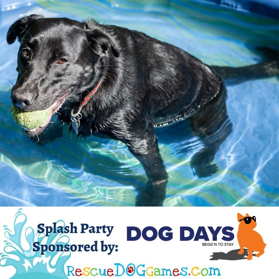Dog Days Splash Party